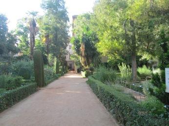Jardín Botánico. Facultad de Derecho. Granada. Foto: Francisco López